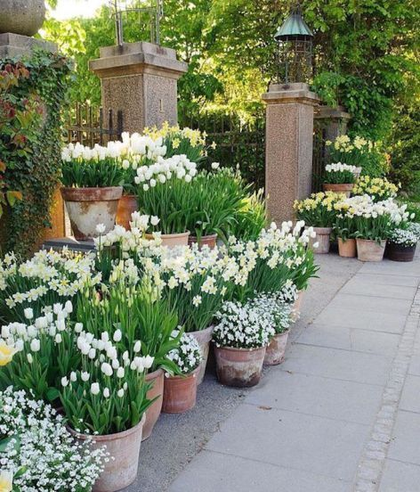 20 Beautiful Backyard Flowers Garden Ideas (14)