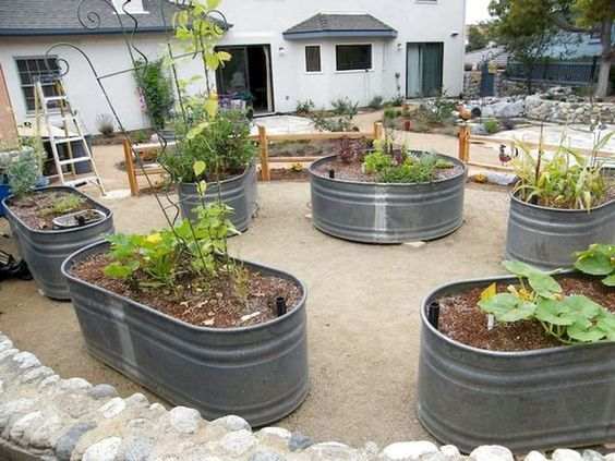 20 Fantastic Container Gardening for Beginners (6)