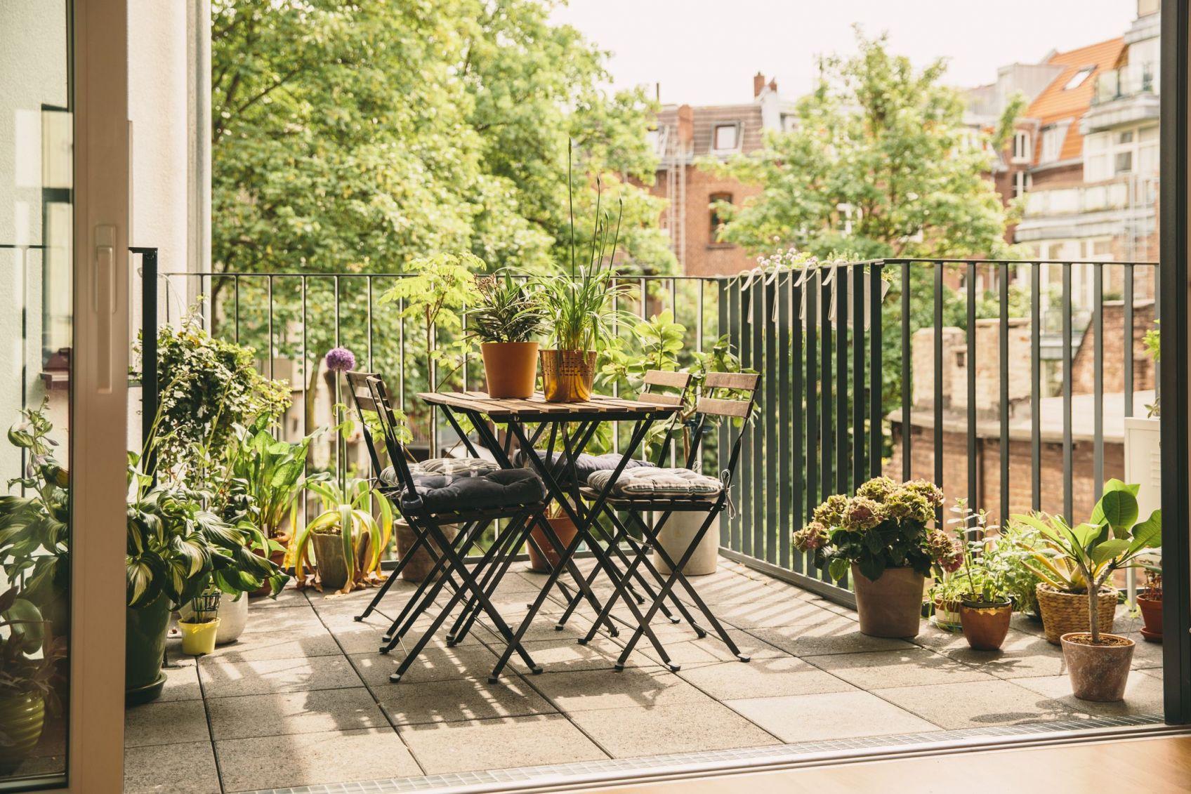 Top balcony plant ideas